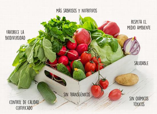 va-de-bio_venta-distribucion-comprar-productos_ecologicos_mallorca_fruta-verdura-consumir-eco_1c